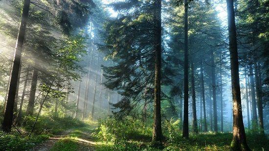 Лес и его жители 2